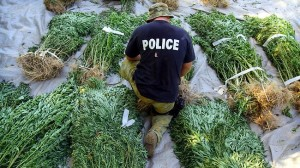 MARIJUANA COP IN FIELD