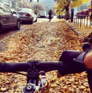 bike track leaves