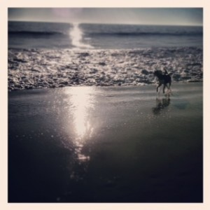 lucy on beach