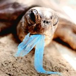 Bag banners conjured this image to sell idea sea mammals eat plastic bags, a claim which has been debunked.