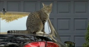 Cute cat, but the car must GO! Photo: Screenshot/KATU